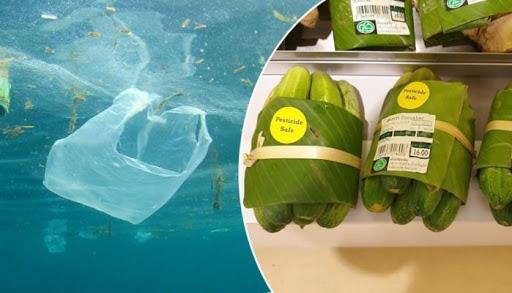 banana leaf technologies