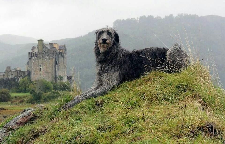 Top 10 Strongest Dog Breeds to Watch out for